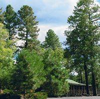 Nine Pines Motel logo