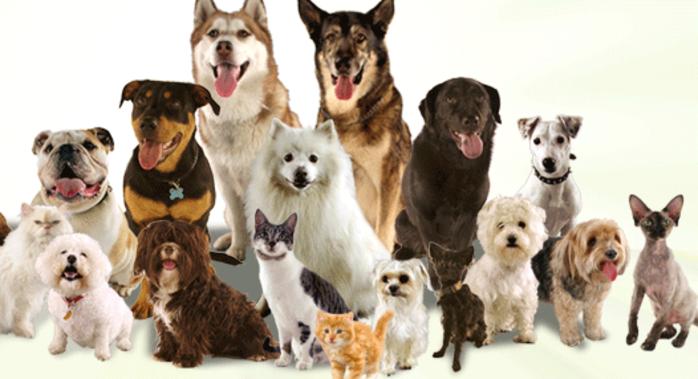 Furry Friends Kennel logo