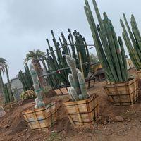 Old West Cactus Farm logo